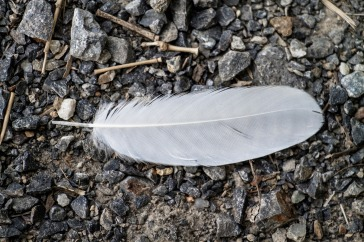 birds-1014986_1920