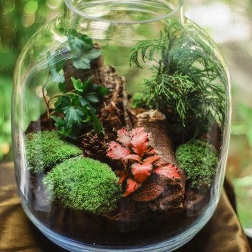environment-glass-glass-jar-1400375